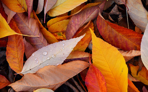autumn, foliage, TEXTURE