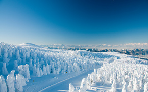 изморозь, Ямагата, Япония.зима, деревья, дорога, пейзаж