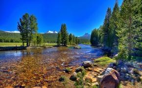 fiume, campo, alberi, pietre, dello stato della California, Tuolumne Meadows