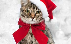 Ano Novo, Natal, férias, COTE, gato, gato, animais, vestuário, boné, Decorações de Natal