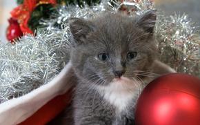 Capodanno, Natale, vacanza, COTE, gatto, gatto, gattino, animali, ornamentazione