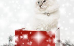 Capodanno, Natale, vacanza, COTE, gatto, gatto, animali, ornamentazione, scatola