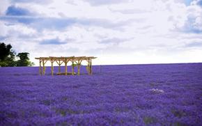 цветы, пейзаж, природа, лаванда, поле, лавандовое поле, поле лаванды