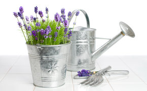 Flowers, lavender, plant, flora, bucket, watering can, garden tools