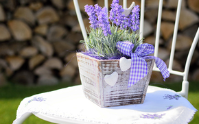 Flowers, lavender, plant, flora, box, chair