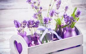 Fiori, lavanda, impianto, flora, scatola, bottiglie
