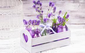 цветы, лаванда, растение, флора, ящик, бутылочки