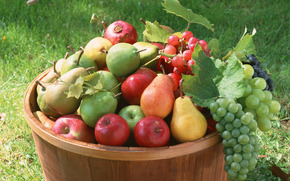 fruit, made dish, flora, plants, fruit, delicious, apples, grapes, pears, barrel, food