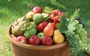 fruct, fel de mâncare făcut, floră, plante, fruct, gustos, mere, struguri, pere, baril, alimente