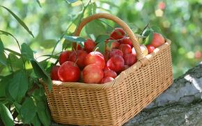 fruta, flora, plantas, fruta, sabroso, cereza-ciruela, cesta, comida
