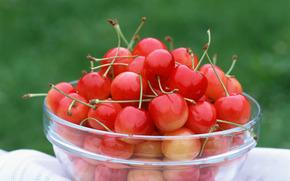 фрукты, ягоды, флора, растения, плоды, вкусно, черешня, чашка, еда