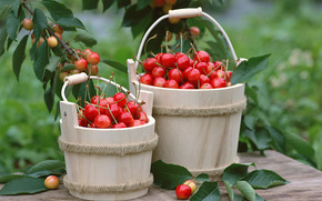 fruit, BERRY, flora, plants, fruit, delicious, cherry, bucket, food