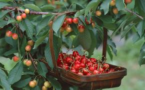 фрукты, ягоды, флора, растения, плоды, вкусно, черешня, дерево, еда