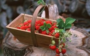 ягоды, флора, растения, плоды, вкусно, клубника, корзина, еда