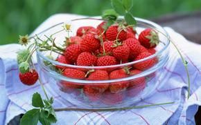 ягоды, флора, растения, плоды, вкусно, клубника, чашка, еда