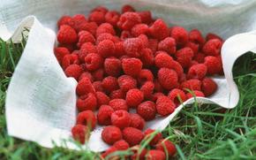 ягоды, флора, растения, плоды, вкусно, малина, еда