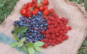 ягоды, флора, растения, плоды, вкусно, черника, малина, еда