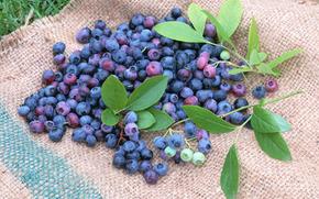 ягоды, флора, растения, плоды, вкусно, черника, еда