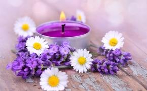цветы, лаванда, ромашки, свеча, доски