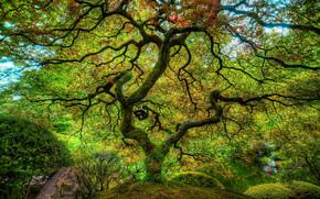 Японский сад, Портленд, Орегон