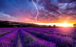 Flowers, landscape, nature, lavender, field, Lavender Field, field of lavender, sunset, lightning