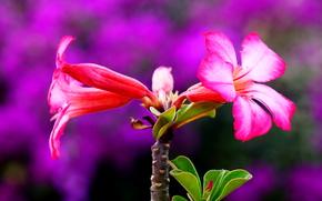 ветка, листья, цветы, флора