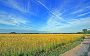 campo, stradale, spighe di grano, paesaggio