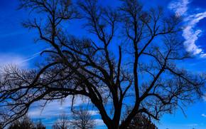 coucher du soleil, arbre, Direction, branches, ciel, couronne, nature