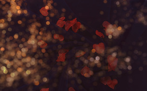 TEXTURE, Texture, black background, bokeh, leaves, foliage, red