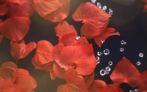 TEXTURE, Texture, black background, bokeh, leaves, foliage, Rhinestones, shine, red