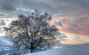 tramonto, inverno, Colline, albero, paesaggio