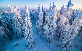 зима, снег, деревья, вид с верху, пейзаж