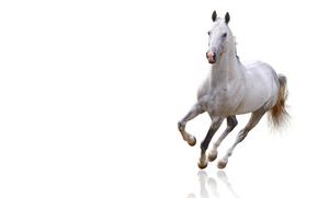 животные, кони, лошади, конь, лошадь, белый фон