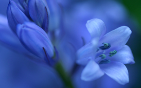 flor, flora, Macro