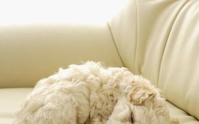 Cane, cane, cane, cucciolo, Cuccioli, pecorina, Doggie, animali, ben, Riccio