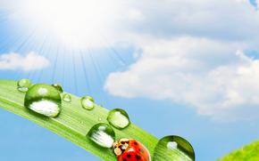 божьи коровки в раю, свет, солнце, свежий воздух, вода, капли, зелень, лето, красотинушка, небо, божья коровка, жук, жуки, макро, рендеринг, насекомые, роса