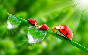 在花园里的瓢虫, 光, 太阳, 新鲜的空气, 水, 滴, 青菜, 夏天, krasotinushka, 瓢虫, BEETLE, 甲虫, 宏, 渲染, 昆虫, 露