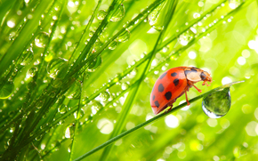 божьи коровки в раю, свет, солнце, свежий воздух, вода, капли, зелень, лето, красотинушка, божья коровка, жук, жуки, макро, рендеринг, насекомые, роса