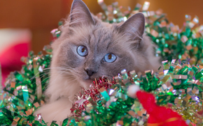 COTE, cat, muzzle, blue eyes, view, tinsel, New Year