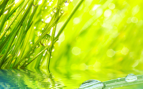Macro, nature, drops, dew, water, greens, grass, grass, Rendering