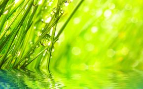макро, природа, капли, роса, вода, зелень, травинки, трава, рендеринг