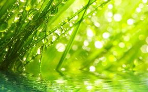 Macro, natura, gocce, rugiada, acqua, verdi, erba, erba, Rendering