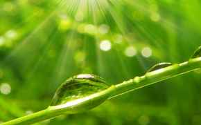 Macro, naturaleza, gotas, rocío, agua, verduras, hierba, hierba, Rendering