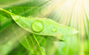 Macro, nature, drops, dew, water, greens, leaves, Rendering