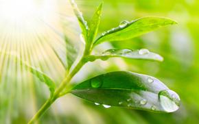 Macro, nature, drops, dew, water, greens, leaves, Rendering