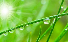Macro, nature, drops, dew, water, greens, grass, grass, Rendering