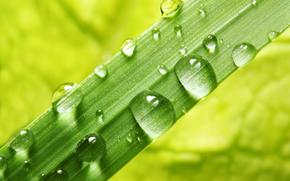 макро, природа, капли, роса, вода, зелень, травинка, трава, рендеринг