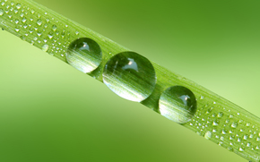 Macro, natura, gocce, rugiada, acqua, verdi, lama, erba, Rendering