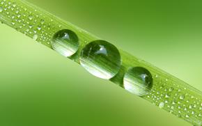 Macro, naturaleza, gotas, rocío, agua, verduras, hoja, hierba, Rendering