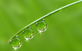 Macro, nature, drops, dew, water, greens, blade, grass, Rendering
